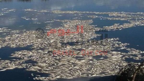العثور على أطنان من الأسماك النافقة بنهر النيل في المنصورة