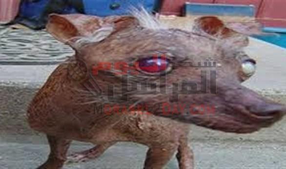حيوان غريب يعقر 12 طفلاً بالفيوم .. وجهود مكثفة لقتله بعد هروبه للمزارع