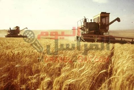 """""""الزراعة"""": استلام 2.89 مليون طن من القمح حتى الآن بالمحافظات المختلفة"""