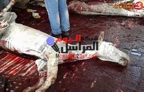 القبض على شخصين أثناء ذبحهم حمار ببني سويف