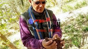 زراعة 30 ألف فدان قمح، و1400 فدان بنجر سكر، ،1600 فدان بطاطس بمركز الفرافرة الوادى الجديد .