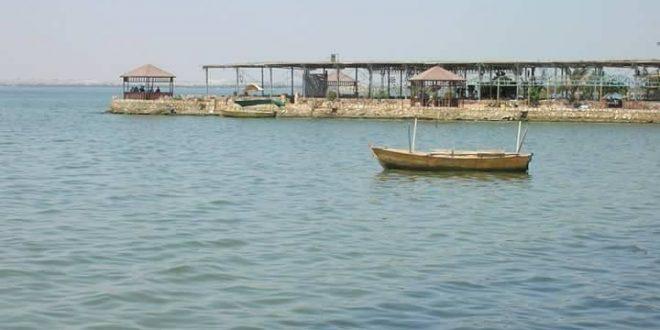 """طفيل قشري"""" يهدد الثروة السمكية ببحيرة قارون"""