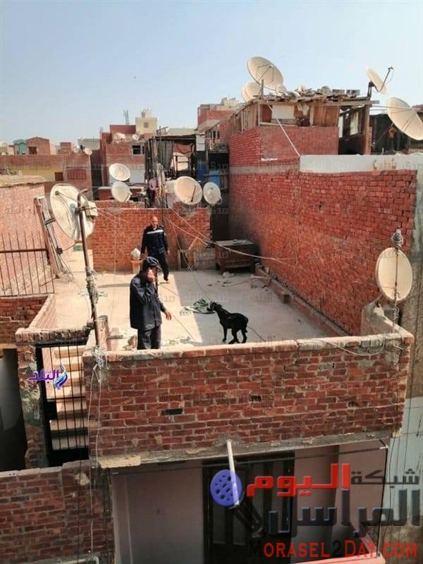 شرطة المنوفية تتحرك لإنقاذ معزة بعد استغاثة سلمي