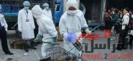 بائعة الجمبرى اول مريضة كورونا في الصين وناقلة الوباء حول العالم.