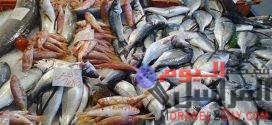 رعب عالمي من الأسماك المجمدة التي يعيش عليها الفيروس مدة 3 شهور